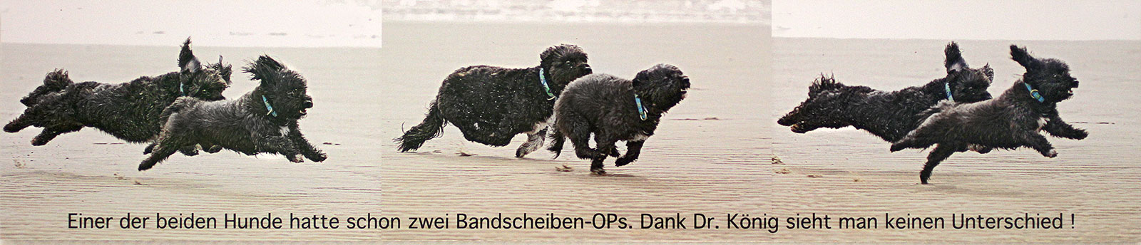 Hunde ohne Beschwerden Dank guter Tier-Neurochirurgie