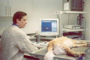Nervenfunktionstest bei einem schlafenden Hund
